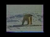 Белый Медведь - Фильм Юрия Ледина