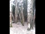 Наши приключения в лесу) часть 1