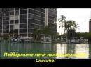 Америка. Как живут люди? видео. Рыбалка в Америке. Флорида: акулы, пеликаны и дельфины .