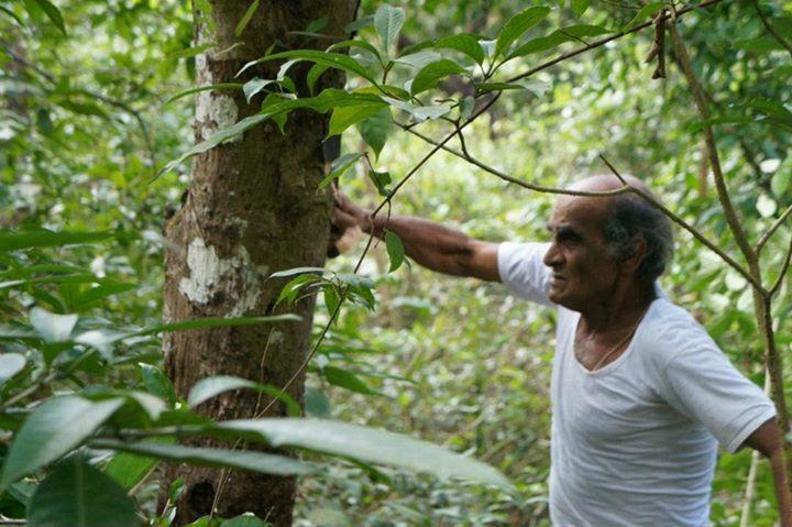 Нараянамурти высматривает подходящее дерево. Не все подходят.