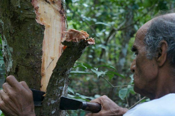 Кажется, найдено то, что нужно. Кора сдирается понемногу, чтобы дерево могло расти дальше.