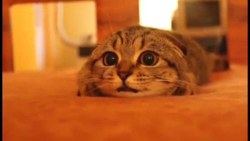 кот в ужисе