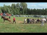 TUG OF WAR 1 Horse against 18 men