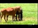 Дикая лошадь убивает своего жеребёнка! Естественный отбор и беспощадня природа