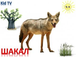 Мультик от kidTV Животные Африки и их звуки Развивающий мультик для детей (звуки животных) (1)
