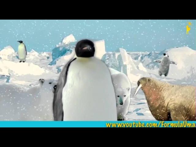 Почему пингвины не мерзнут босиком мультфильмы для умных детей Формула Ума