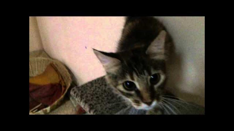 Кошечка Цисси, 1,5 года