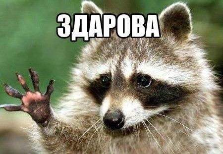 животные на аву в контакте: