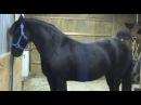 Для этой лошади в конюшне не существует засовов самое умное животное