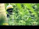 "Official Music Stephen Ragga"" Marley ft Spragga Benz Damian Marley Bongo Nyah"