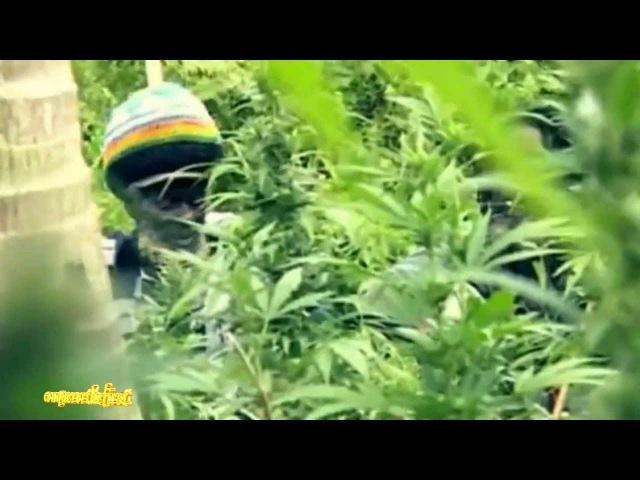 "Official Music - Stephen ""Ragga"" Marley ft Spragga Benz Damian Marley Bongo Nyah"