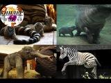 Детки из зоопарков мира. Лучшее: сентябрь! Киндер Зу