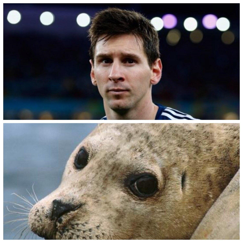 Месси и тюлень