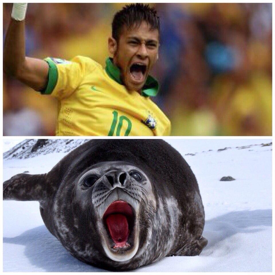 Неймар и тюлень