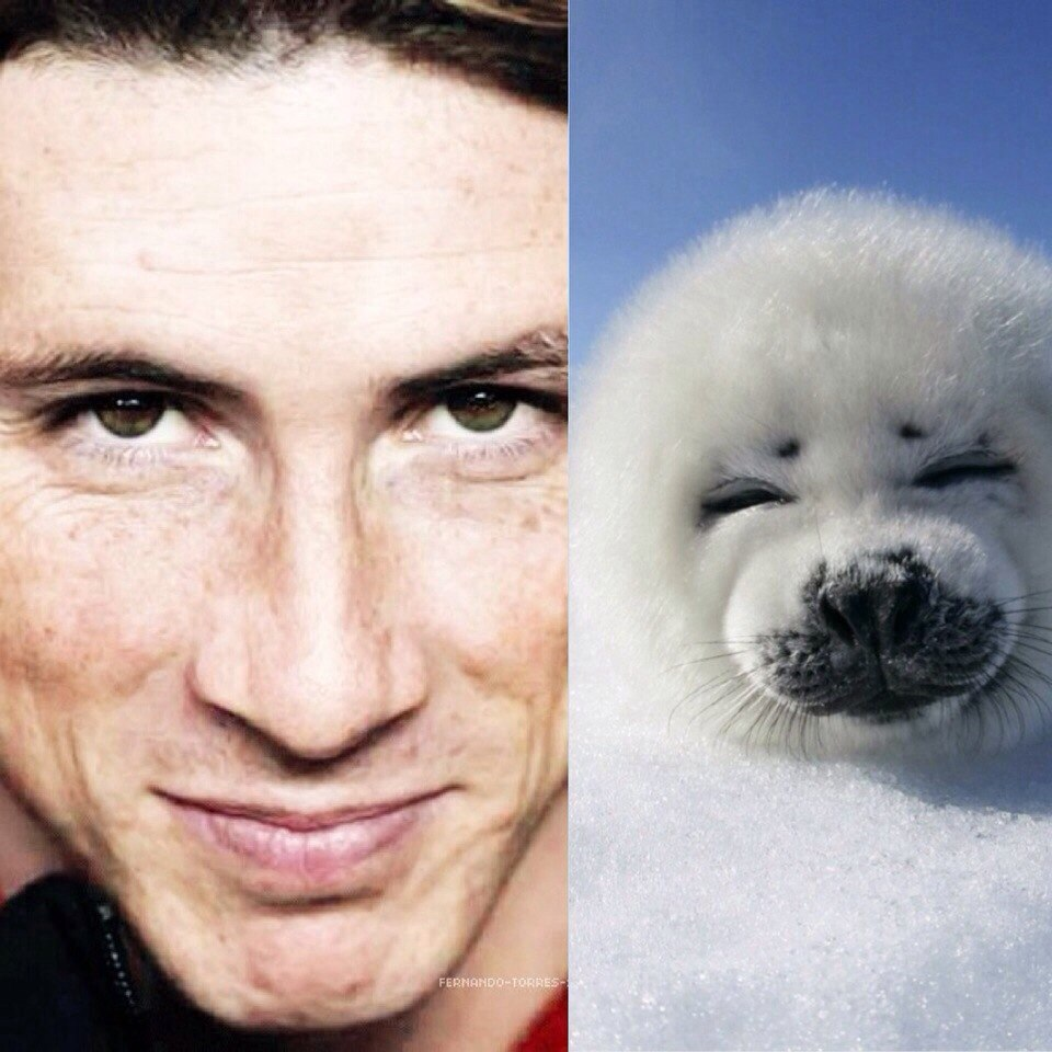 Торрес и тюлень