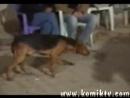Ankara Havasında Oynayan Köpek