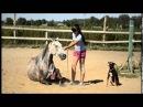 Лошадь против собаки Перис и Дана