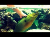 Oliver The Green Moray Eel Loves to be Petted