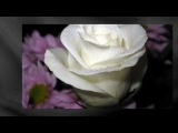 White Roses-Белые розы М Шуфутинский