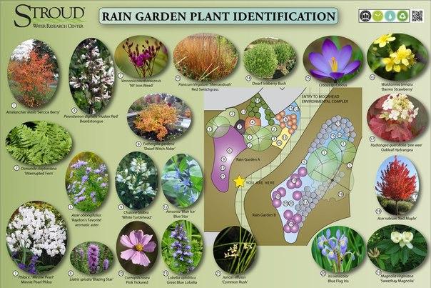 #схема #растения #посадки