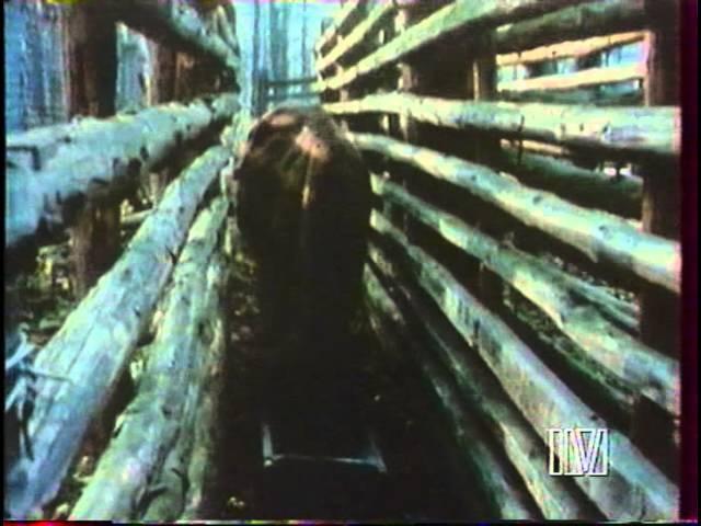 Даррелл в России: Возвращение зубра (10 серия)