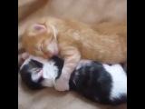 """Без кота и жизнь не та. on Instagram: """"Всем доброе утро и хорошей рабочей недели ?#видео #вайн #кот #котейка #video #vine"""""""