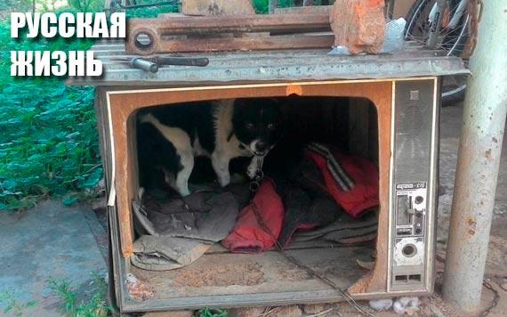 Урожай зерновых в Украине по сравнению с прошлым годом сократился на 6%, - Госстат - Цензор.НЕТ 7699