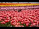 Ландшафтный дизайн.Самые яркие и красивые цветы в мире. Скульптуры из цветов