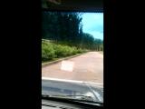 Едем на страусиную ферму : )))