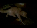 Мой бешеный кот
