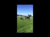 [Кавказский Переулок] Лошадь наказала Шкуру