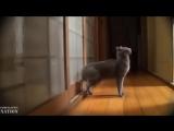Самые смешные видео про котов Супер приколы! Выпуск 8