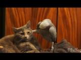 Смешное видео про животных Лучшие приколы про животных Улетные животные. Смешно до слез.
