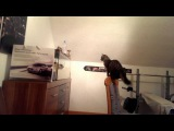 Cat jumping against aquarium - Funny cat jump fail [ORIGINAL HD]