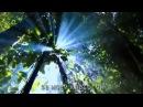 Природа говорит – Тропический лес (Kevin Spacey) Conservation International CI