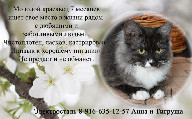 Кому радость в дом? Бесплатно!))))) Mn-48GvCoSM