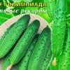 Агрофирма Манул-Авторские семена овощных культур