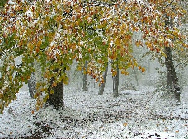 Заговоры на прибыль на снег
