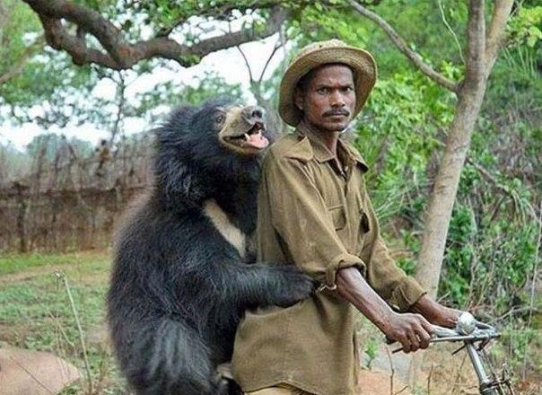 Самые забавные снимки с медведями