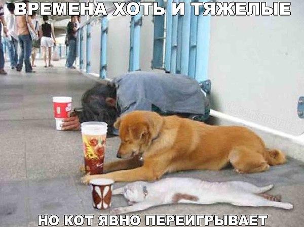 http://cs622221.vk.me/v622221364/48ad6/9FNBd5n9uqU.jpg