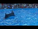 танец дельфина и человека