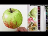 How to paint a red and green apple without making brown - in watercolor - by Anna Mason