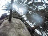 Бывшее излюбленное место сиверских грибников. Лесная чаща, лежащая между Сиверской и Белогоркой, вдоль ул