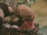 Был домовой - станешь гнездовой! (м/ф Домовёнок Кузя)