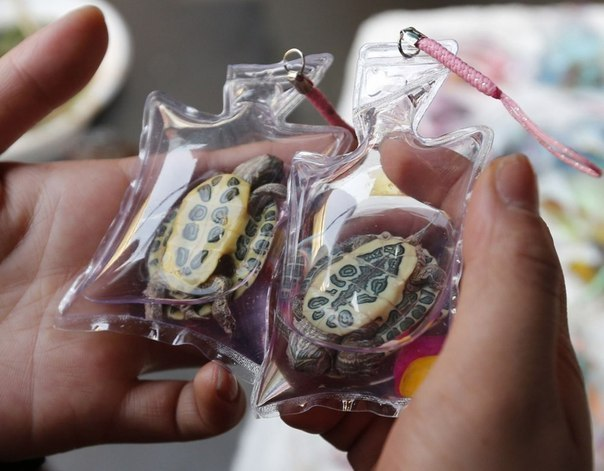 В Китае продают так называемые брелоки с кислородом и животными