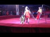 Шапито евро цирк