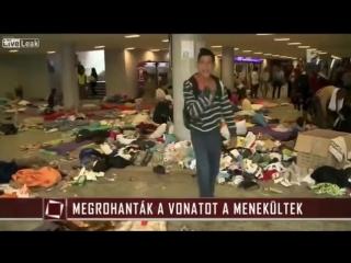 Беженцы в Европе.жест отрезания головы