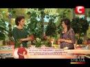 Как вырастить каланхоэ у себя дома - Совет от Все буде добре - Выпуск 86 - 27.11.2012