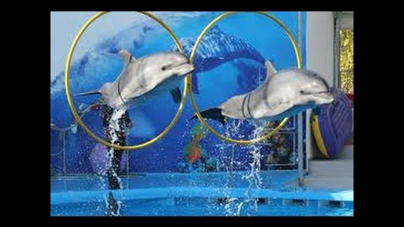 Мега позитивное шоу на воде, не верится своим глазам /positive show on water, it disbelieves the eye