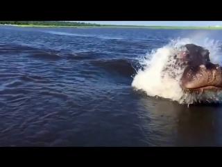 Атака бегемота-подводника
